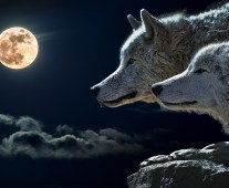 Wolf Full Moon Jan 1 2018 www.stacieoverman.com