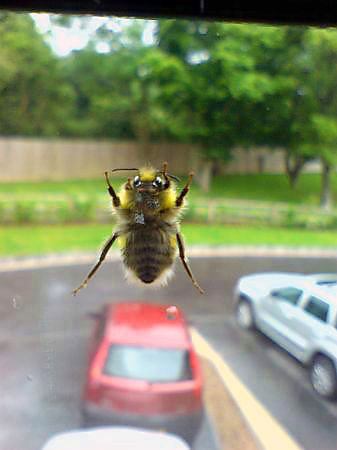 window-bee