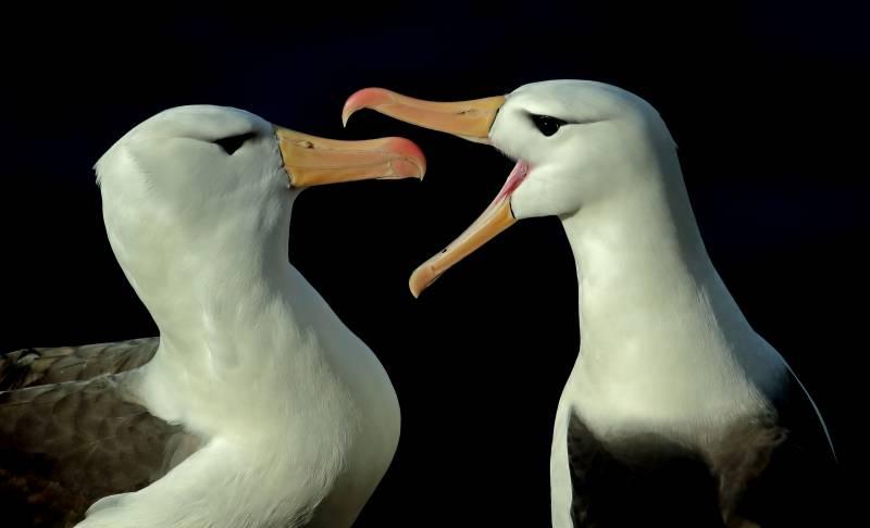 """""""Hörst du, was ich sage?"""" Foto: Tom Shandy/Glanzlichter '20"""