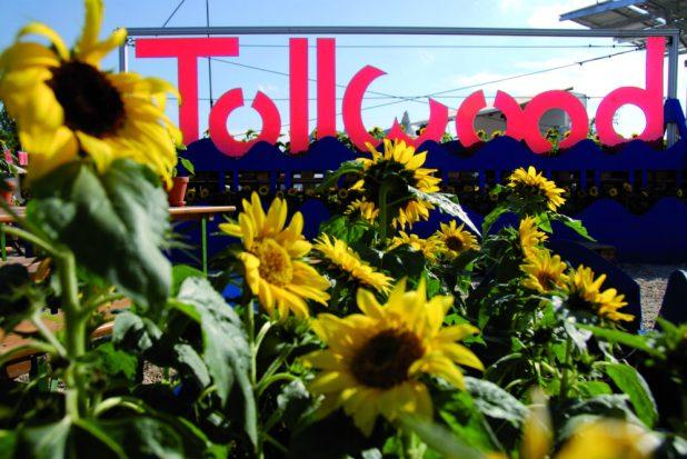 Tollwood Sommerfestival München Quelle Foto: Tollwood/Markus Dlouhy