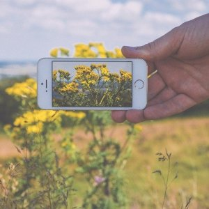 An iPhone captures a clear image of vibrant yellow wildflowers.