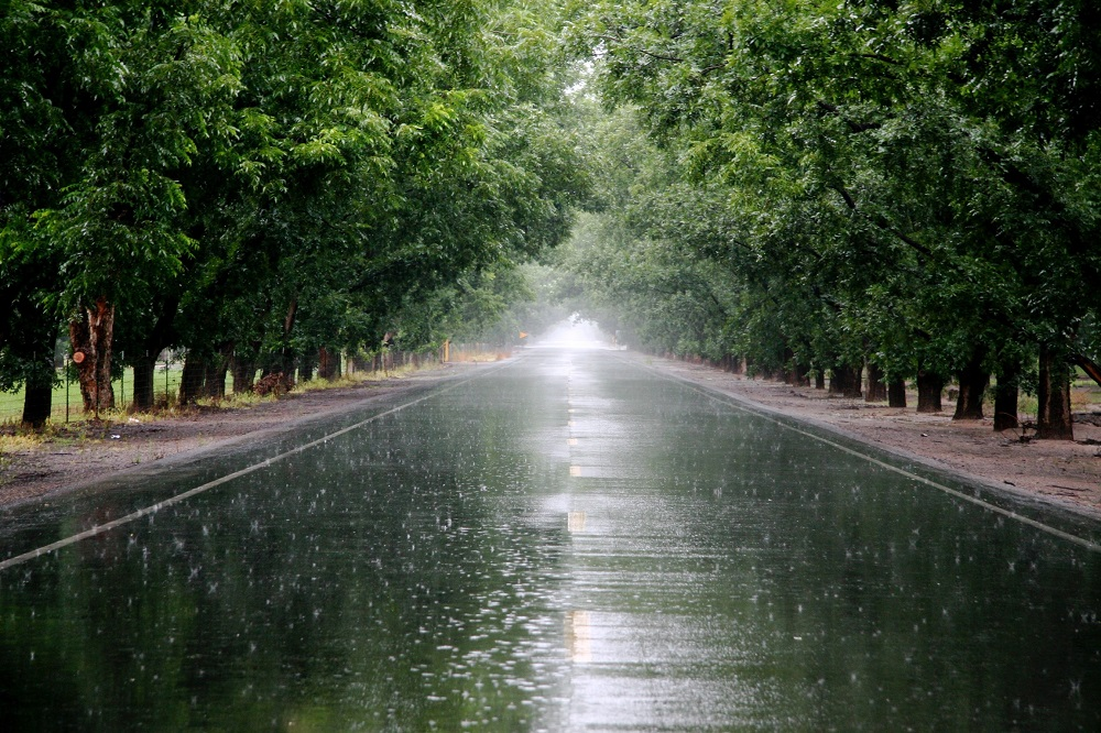 Rainfall for high quality pecans