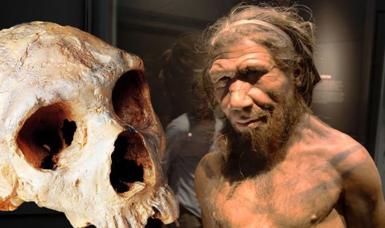 Archaeology news: Neanderthals were NOT wiped out by climate change – study | Science | News