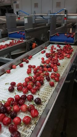 Apulian cherries sales are on hold, but production prices are sky-high -