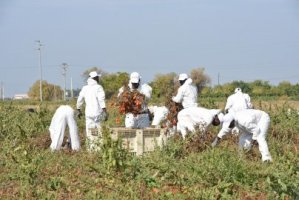 1,781 migrant workers get papers in Italy's Puglia region