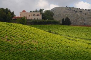 A Fresh Spin On Sicilian And Puglian Italian Wines