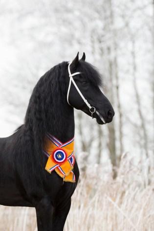 Eise 489 - Paard van het Jaar