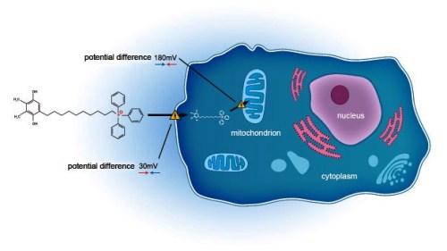 mitochondriální antioxidanty
