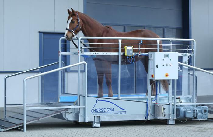 horse-gym-2000-pferdelaufband-home 700x450