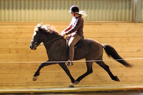 Andvari från Stenholmen f. 1996. Valack, 5-gångare e. Blaer från Stenholmen u. Kolbina frá Vatnsleysu. Svart utan tecken. Andvari är en stor, svenskfödd 5-gångs häst. han är mycket pigg och framåt. Hans favoritgångart är pass!