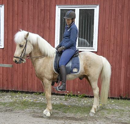 Askur från Ekhaga f. 2005. Valack e. Askur från Håkansgården u. Rakel frá Husey. Isabell. Askur är en underbar 5-gångshäst. Känslig, framåt, fin i form.