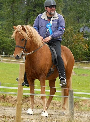 Losti från Lysegården f. 2008. Valack e Vadall frá Varmalaek u Raska (Hvót) frá Dyrfinnusstödum. Fux med ljus man. Losti är en mycket vacker häst. En kopia av sin helbror Laufi! Losti är en underbar ridhäst, mycket bra 5-gångare. Grym passhäst!