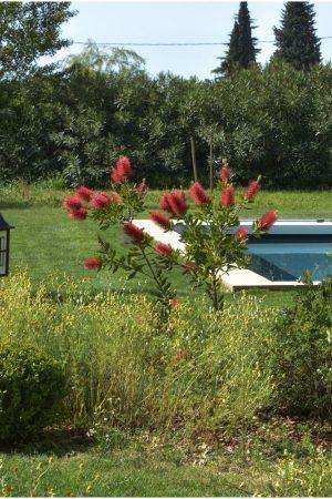 jardin_DSC_7255_photographe hotel chambre d hote Avignon Provence