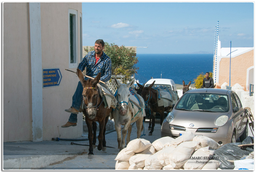 Santorin photographies Oia, les muletiers