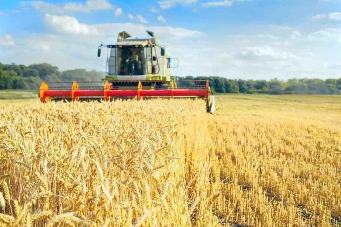 Cura Italia per aziende agricole mietitrebbia in campo di grano