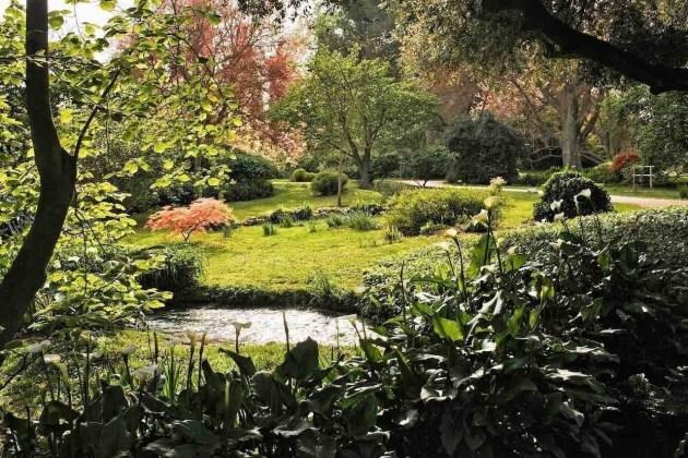 Giardino di Ninfa con fiori bianchi sbocciati vicino a un ruscello