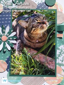Stampin' Cat Delightful Daisy Scrapbooking Global