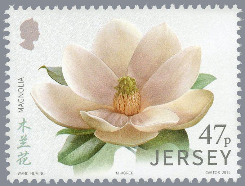 Sello de Jersey dedicado a la magnolia, la flor del magnolio.