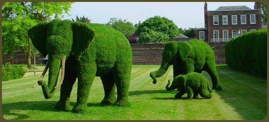 Elephant family of trees!