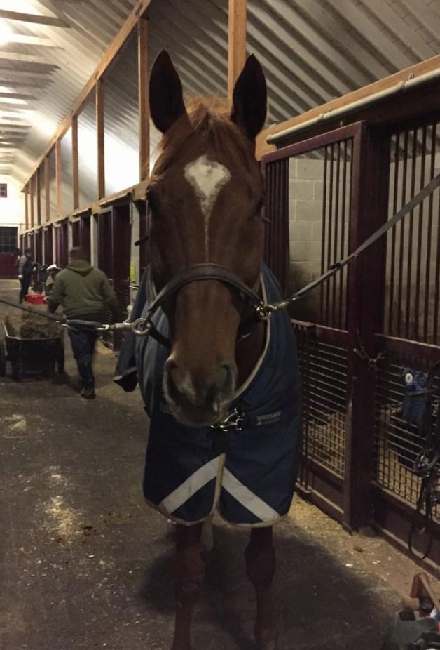 Handsome horsebeast