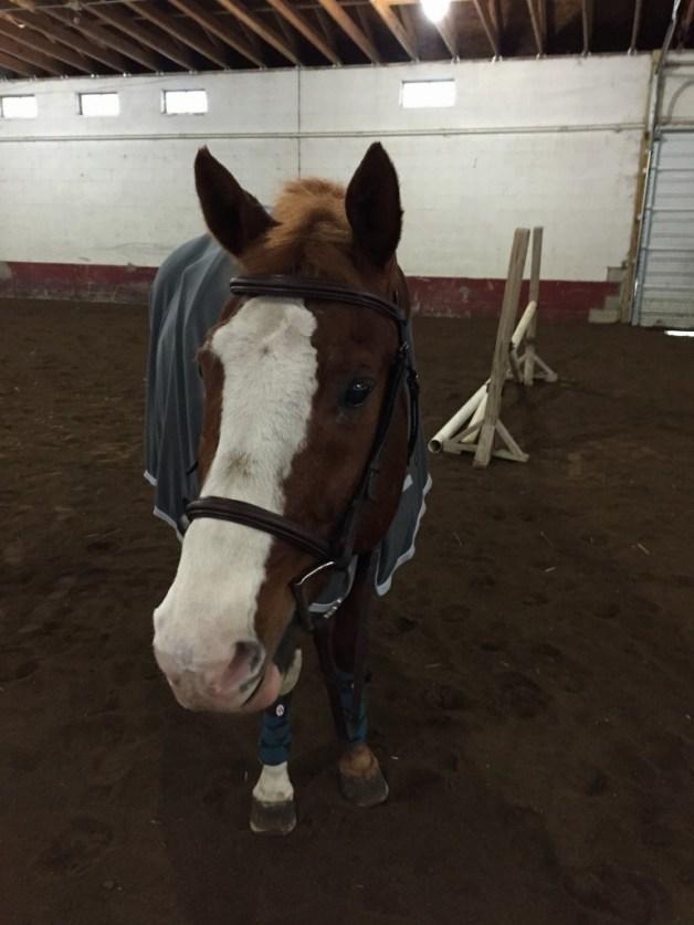 Handsome pony!