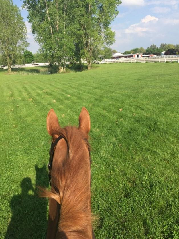 Gawking pony