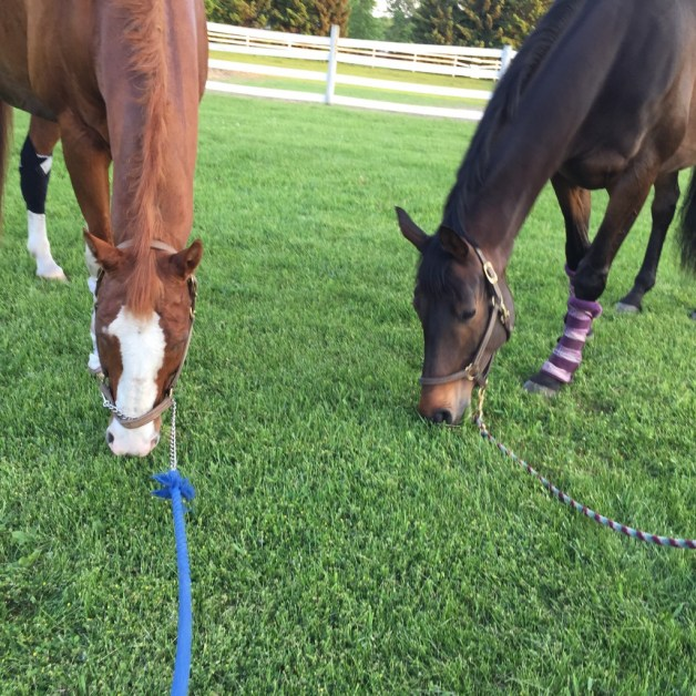 P grazing with his girlfriend Willow Thursday night