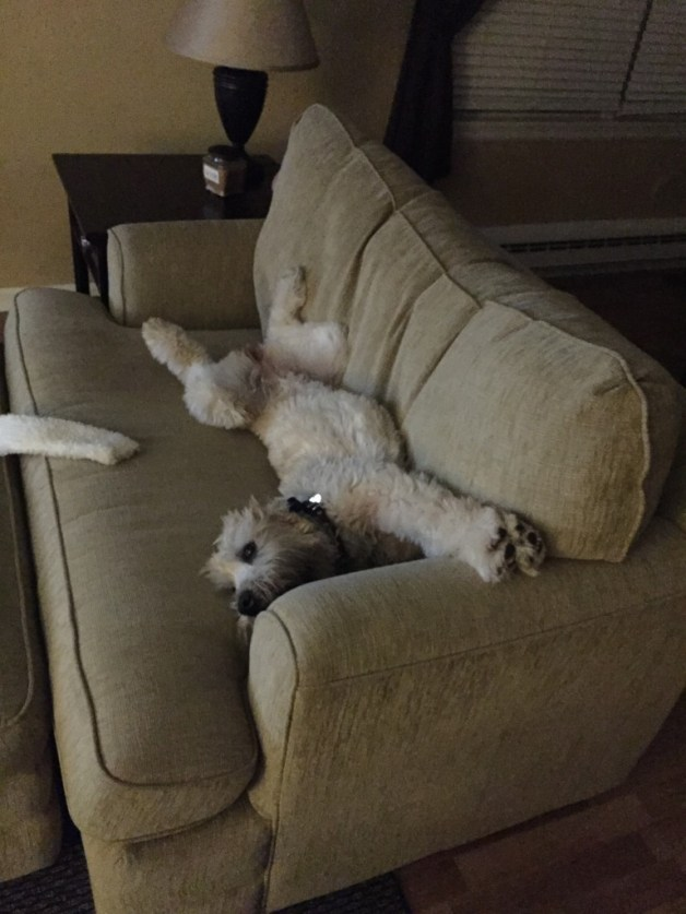 Stretching out on her favorite love seat