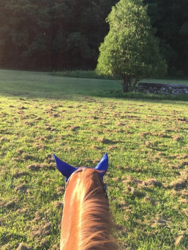 Love field rides!