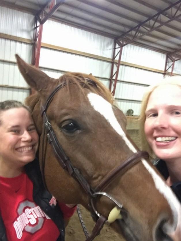 We love chestnut horses