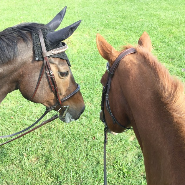 Mr. P and his girlfriend Willow were happy to go on a ride together in the field last weekend.