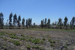 2 Acres Kitengela Acacia Land