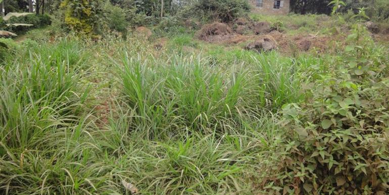 Kikuyu-Thogoto Land