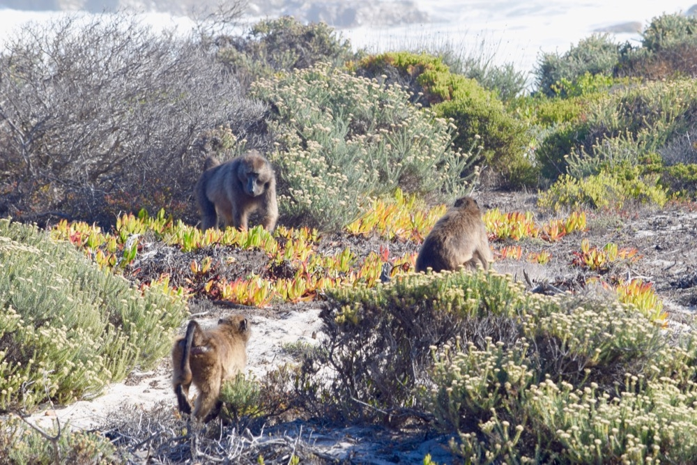 Wild West: Top 5 Nature & Outdoor Spots in the Western Cape, South Africa