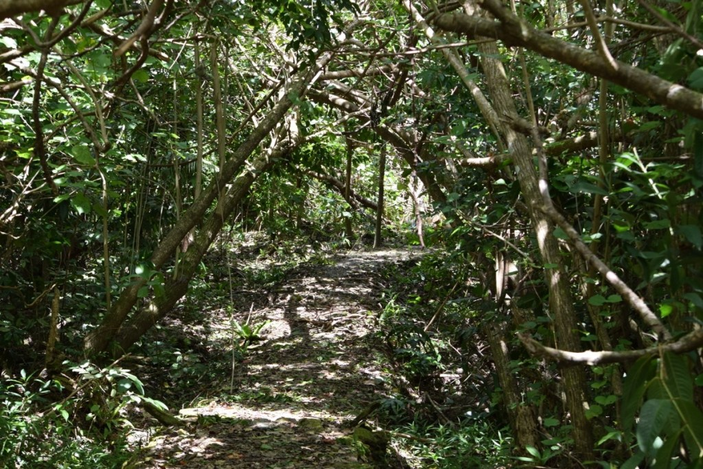 Explore the Land of Stone Money - Tamilyog Trail in Yap, Federated States of Micronesia