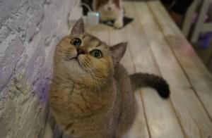 Hamburg heeft een Katzencafé nodig | Standort Hamburg