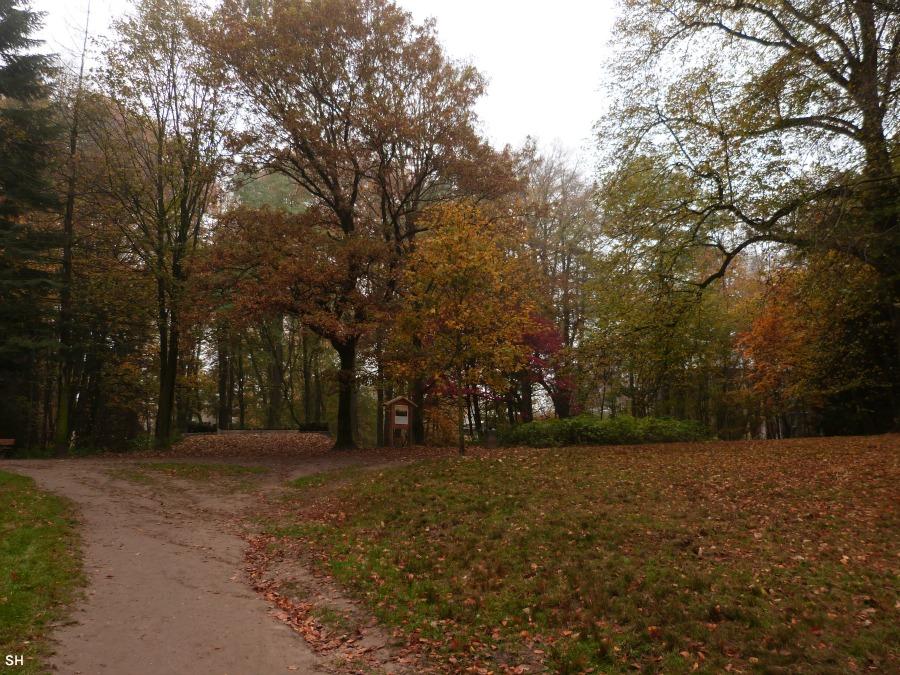 Herfst in het Niendorfer Gehege 2- Standort Hamburg