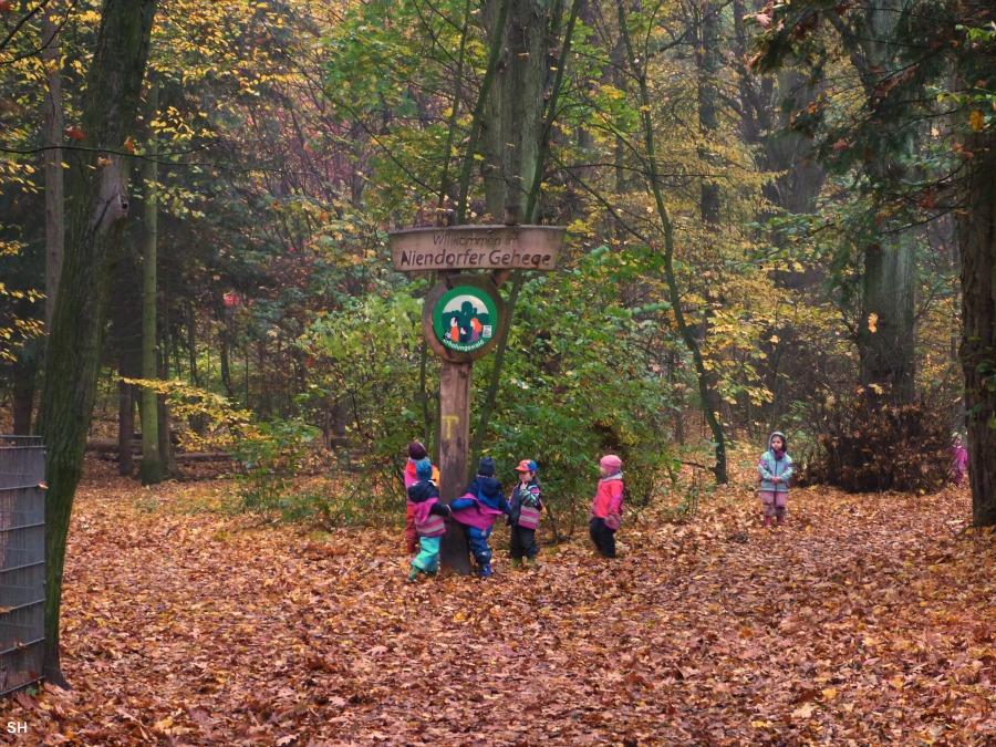 Herfst in het Niendorfer Gehege - Standort Hamburg