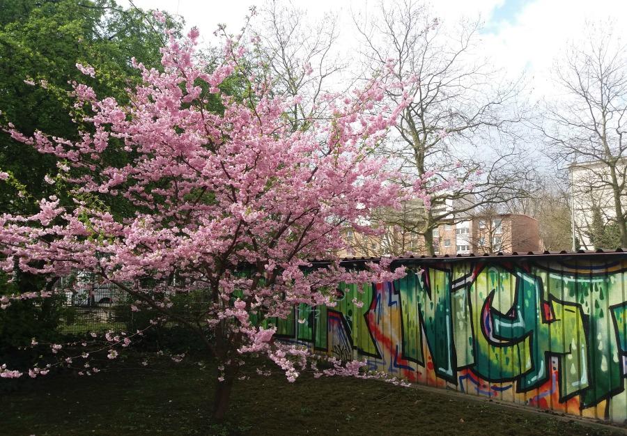 M20160406_Standort Hamburg - Hamburg in de lente - Street Art