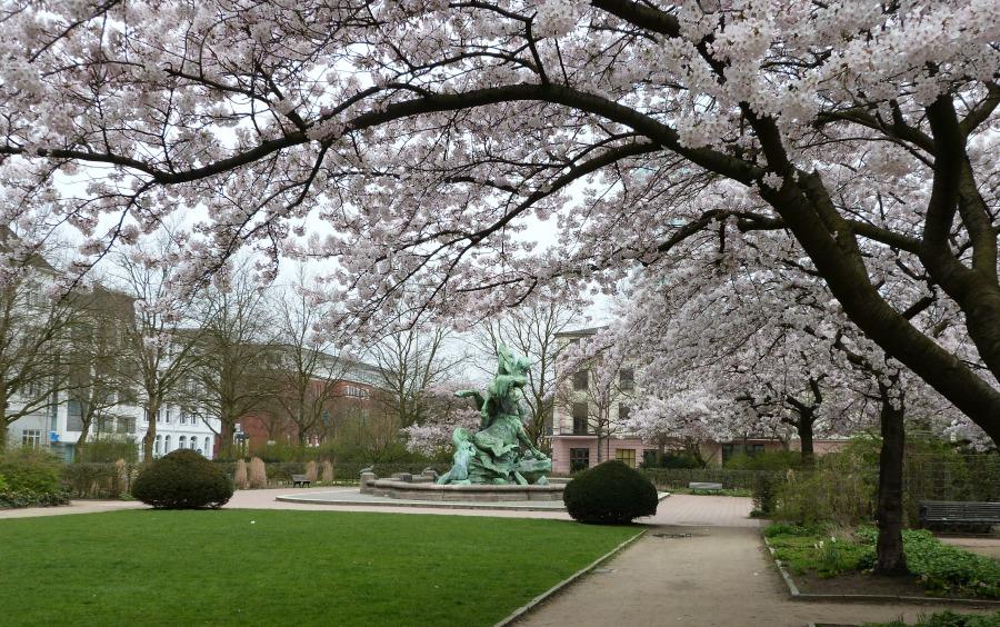 P1060250_Standort Hamburg - Hamburg in de lente - naar het park