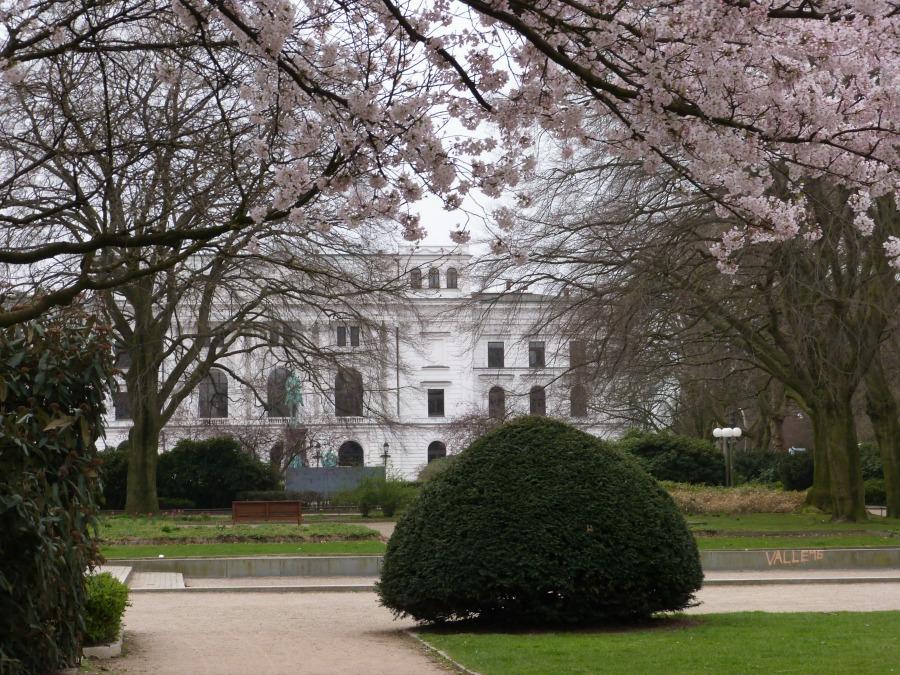 P1060253_Standort Hamburg - Hamburg in de lente - Bloesem aan de Platz der Republik