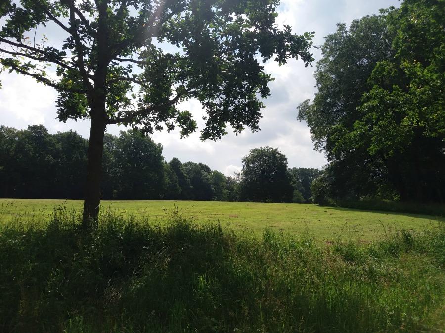 M20160616114609_Standort Hamburg_Jenisch-Park