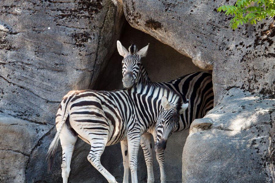 Tierpark Hagenbeck - bezoek de dierentuin in Hamburg