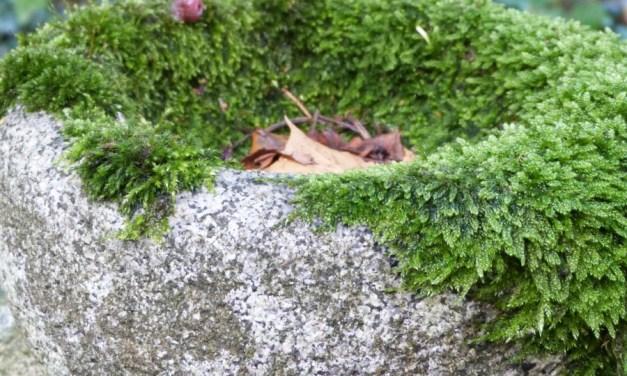 Herfstwandelen op het Ohlsdorfer Friedhof