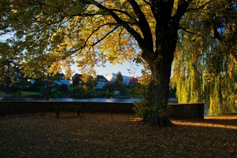 Herfst in Hamburg: Alsterwandeling