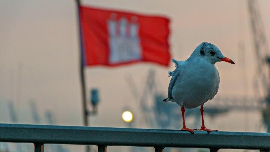 Verzekeren in Duitsland: welke verzekeringen heb je nodig als je naar Hamburg verhuist?