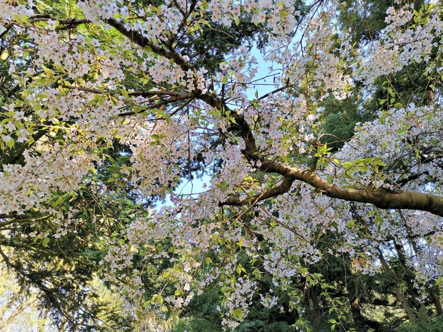 Lente in de Loki Schmidt Garten