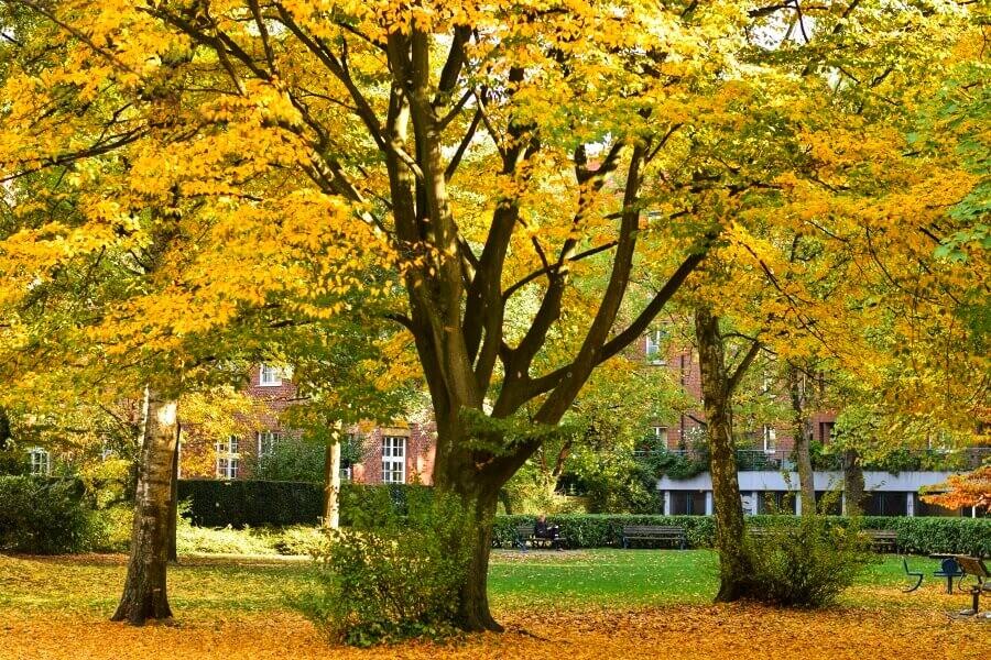 gouden herfst in Hamburg