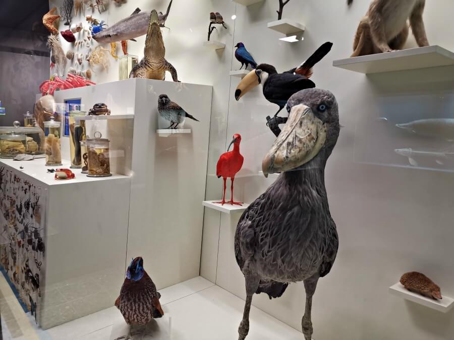 Musea in Hamburg: een overzicht van de mooiste musea