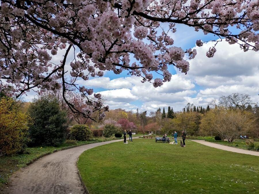 Lentebloesem in het volkspark van Altona